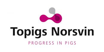Topigs Norsvin